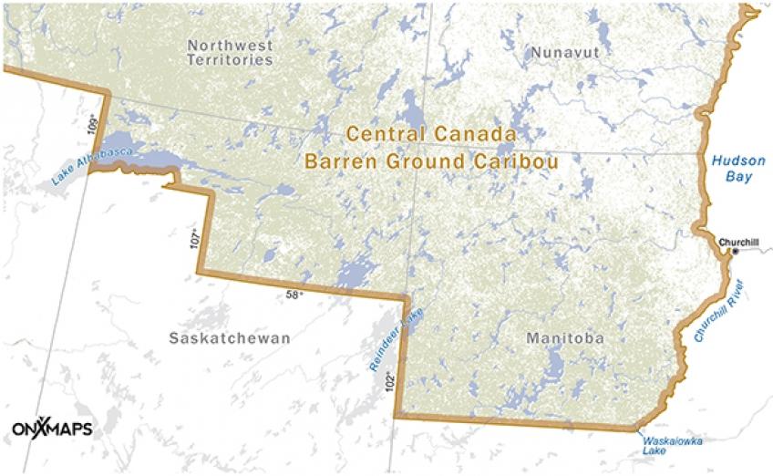 C2-L-Caribou-CentralCanada_600pxW.jpg