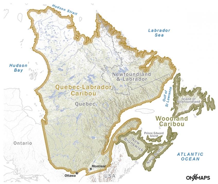 C2-M-Caribou-QL-Woodland_600pxW.jpg