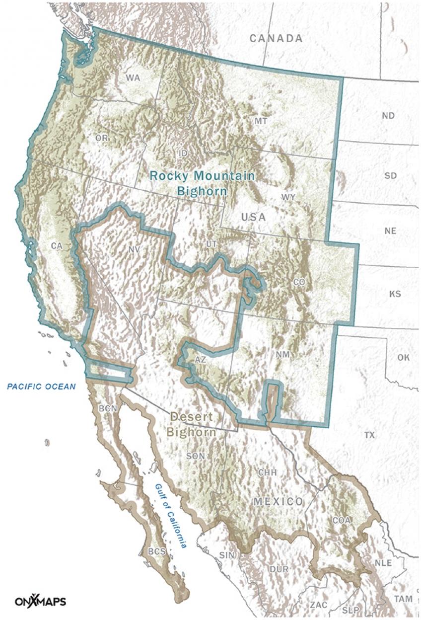 C2-O-Bighorn_600pxW.jpg
