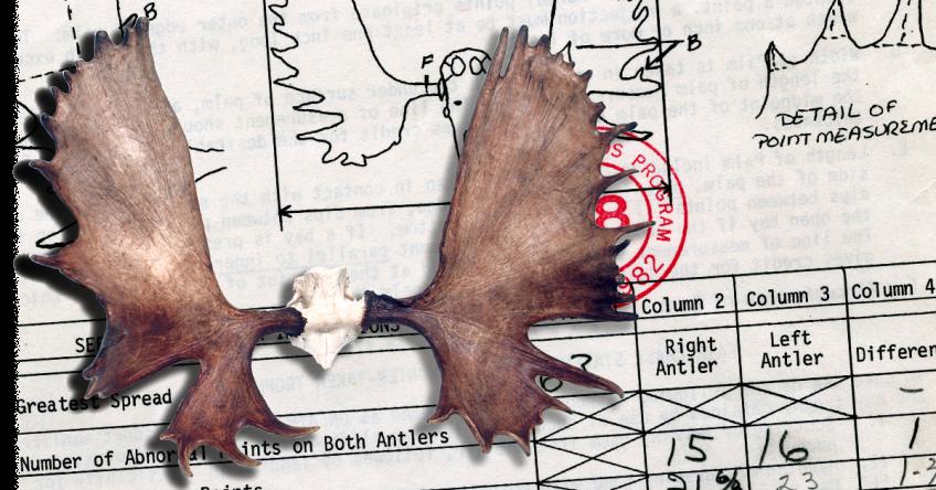 World's Record Canada Moose