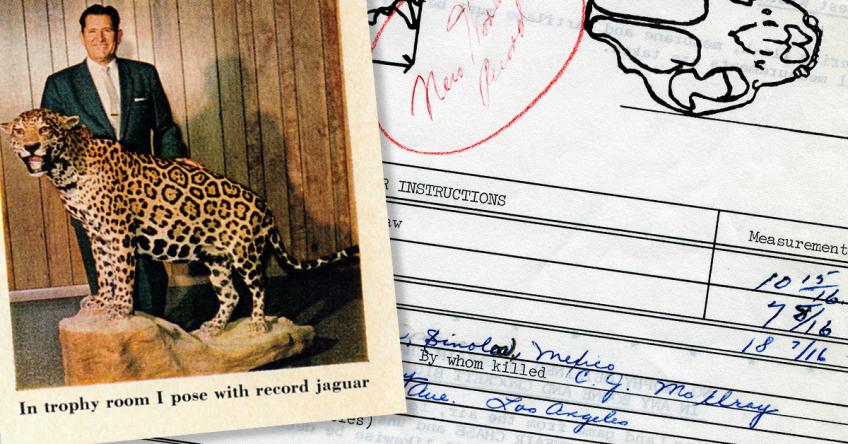 World's Record Jaguar