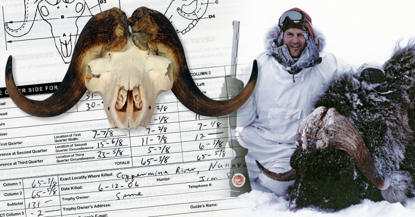 World's Record Musk Ox - Tie Shockey