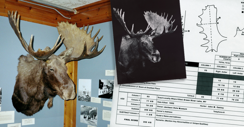 World's Record Shiras' Moose