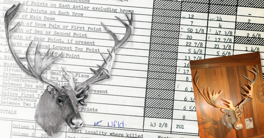 World's Record Woodland Caribou
