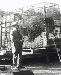 Dr. Hornaday with Bison