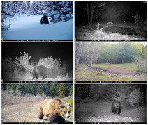 trailcamcollage-card.jpg