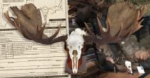 World's Record Alaska-Yukon Moose