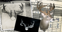 World's Record Coues' Whitetail - Typical