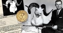 World's Record Dall's Sheep