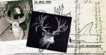 World's Record Mule Deer - Non-Typical