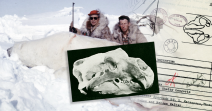 World's Record Polar Bear