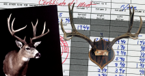 World's Record Sitka Blacktail - Typical