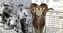 World's Record Stone's Sheep