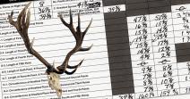 World's Record Tule Elk