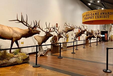 5-7-2019-30th-elk-display.jpg