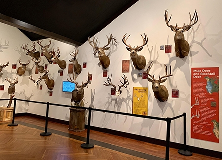 5-7-2019-30th-mule-deer.jpg