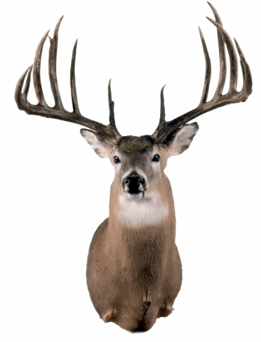 Milo N. Hanson's World Record Whitetail Deer - Typical antlers