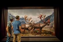 2-28-2019-national-park-diorama-1.jpg