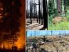 foresthealth-opener-4images.jpg