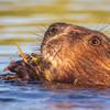 scienceblasts-summer21-beavercard.jpg