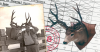 World's Record Columbia Blacktail Deer - Typical