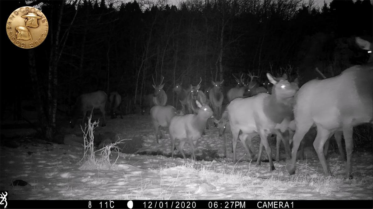 elk-herd_1500-screenshot-1200px.jpg