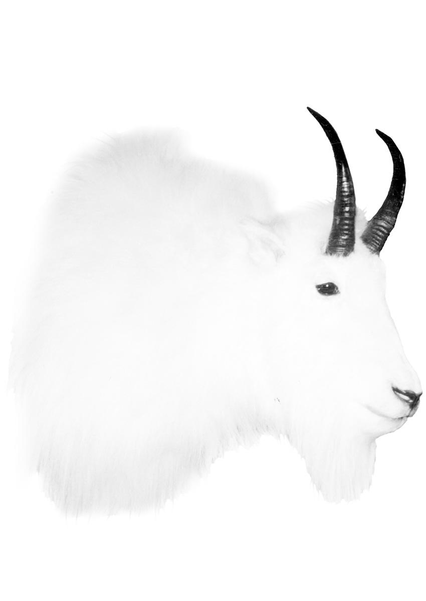 FJ-Goat-MIN.jpg