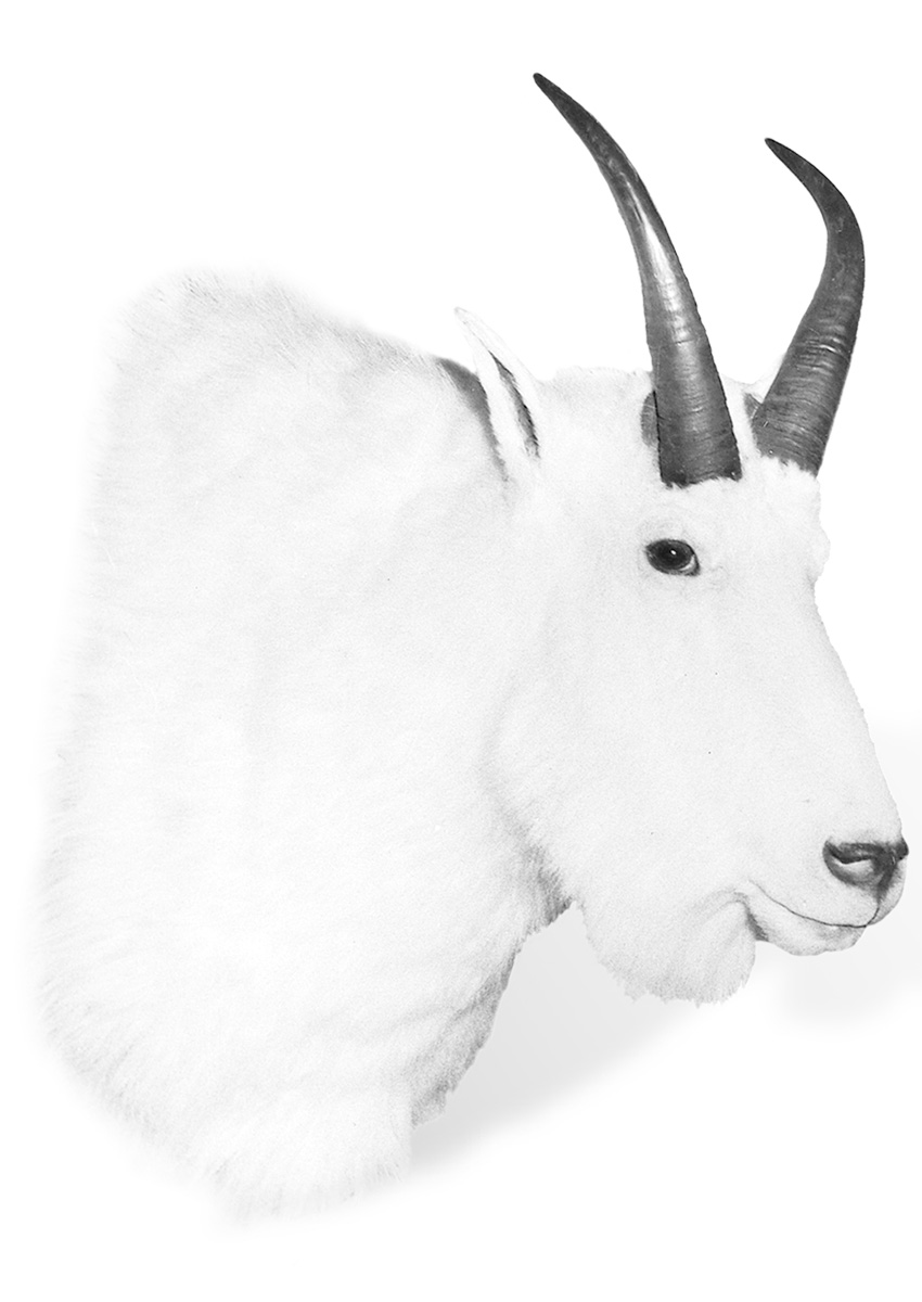 FJ-Goat-WR.jpg