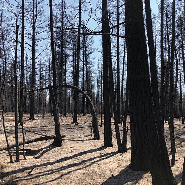 foresthealth-destruction.jpg
