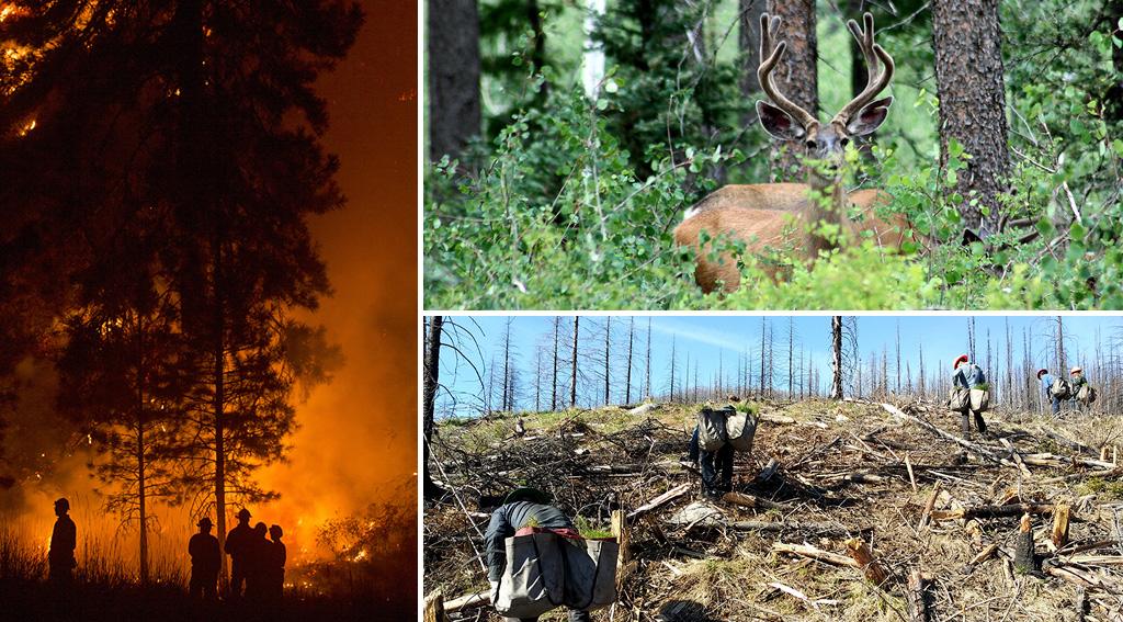 foresthealth-landscape-3images.jpg