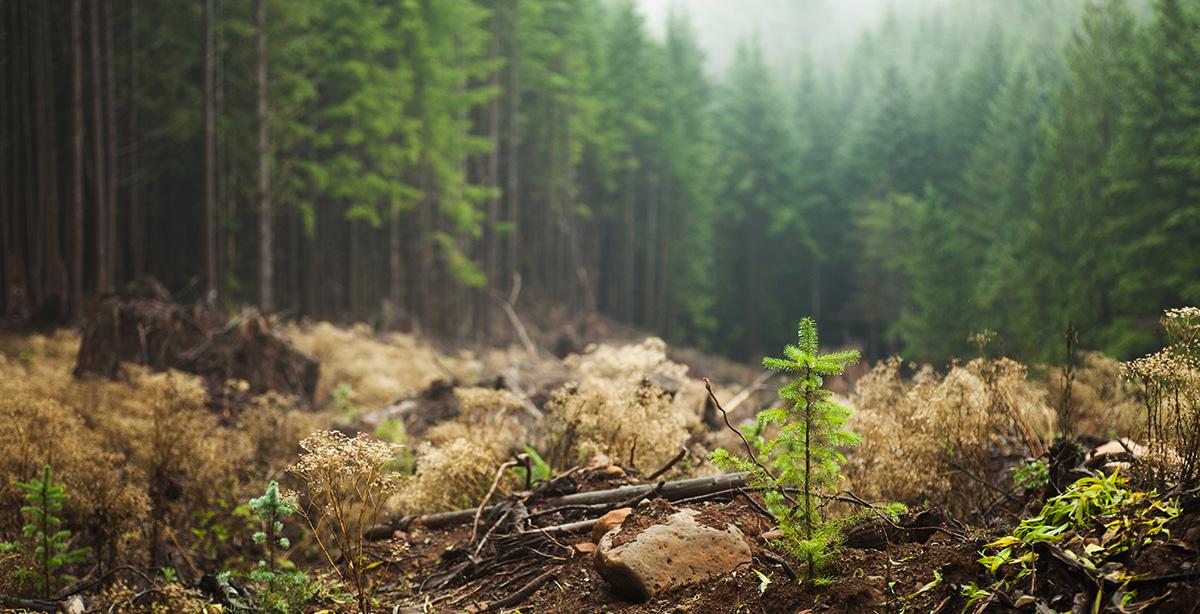 hunt30x30-reforestation-istock-171571526.jpg