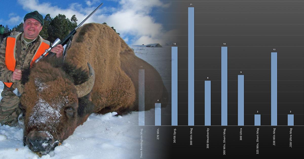 method-bison-collage.jpg