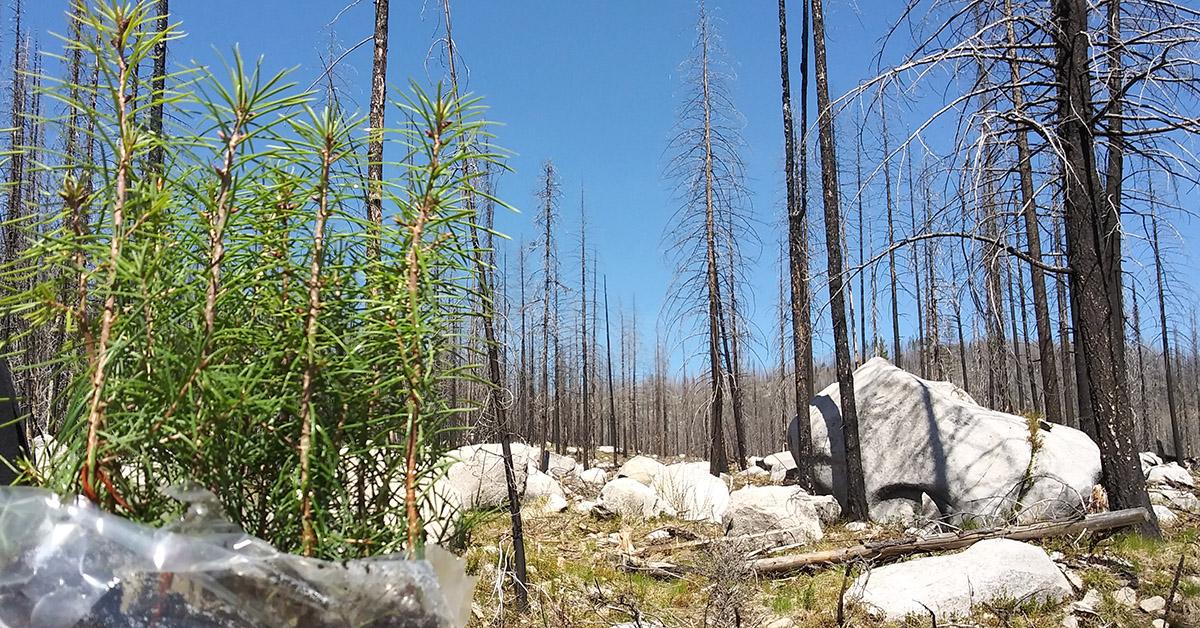 news-07-14-2021-infastructurereforestation.jpg