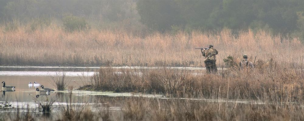 rec2-birdhunters-istock-459014505-header.jpg