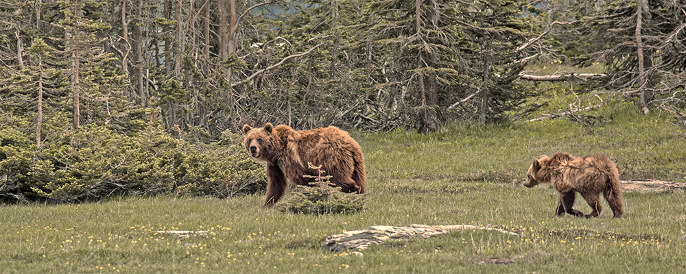 rec7-grizzly-istock-826512138-header.jpg