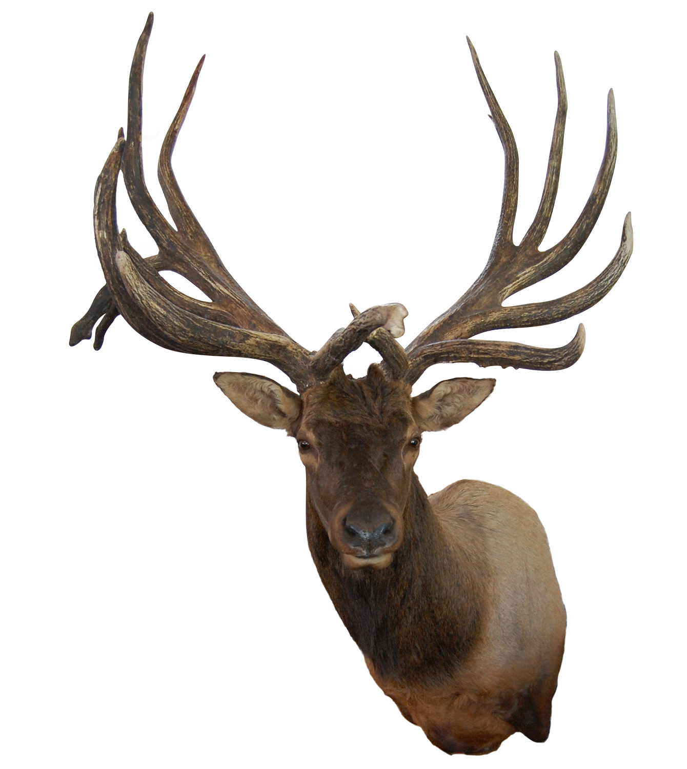 B C World S Record Non Typical American Elk Boone And Crockett Club